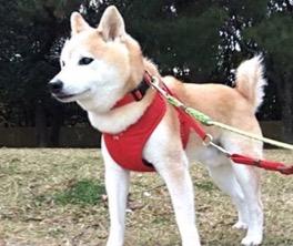 Column 24:愛犬リョーマとイノシシ