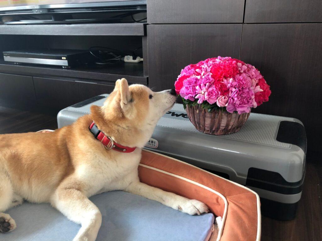 Column79:愛犬リョーマが認知症になった!